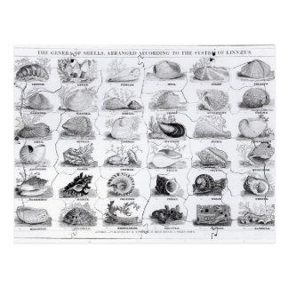 貝のジグソーパズル、パブの属。 W. Edwards著 ポストカード