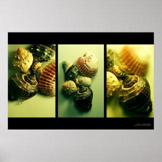 貝の想像 ポスター