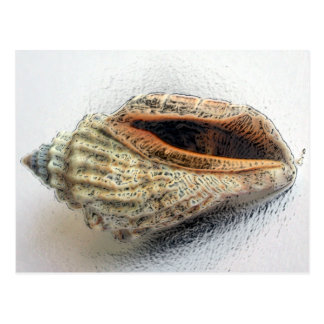 貝の郵便はがき ポストカード
