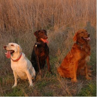 貝リッジの3匹の熱狂するな子犬 写真彫刻(台付き)