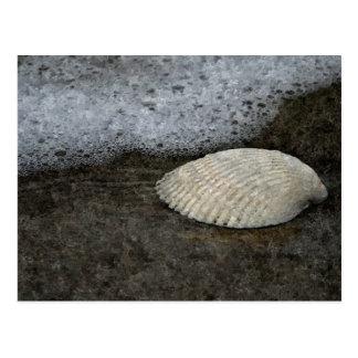 貝及び海のアートワーク ポストカード