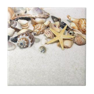 貝殻のタイル タイル