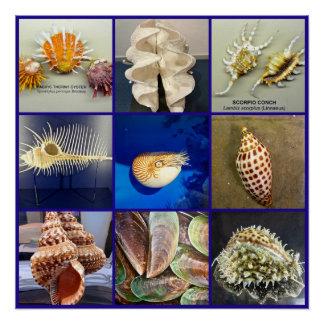貝殻の写真撮影のSanibelのエキゾチックな島フロリダ ポスター