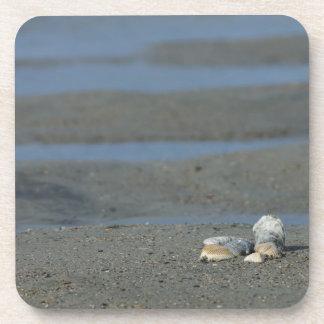 貝殻の山 コースター