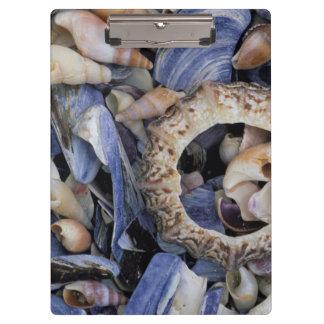 貝殻、ケープタウン、西ケープ州 クリップボード