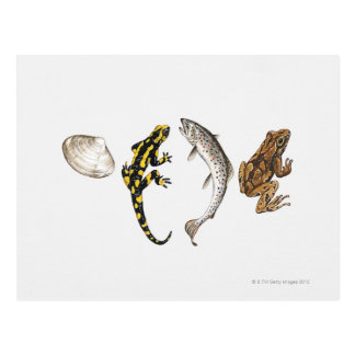 貝殻、サンショウウオ、サケ ポストカード