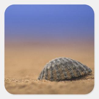 貝殻 スクエアシール