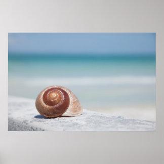 貝殻 セント・ピーターズバーグ、フロリダ ポスター