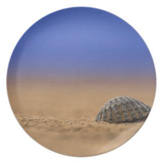 貝殻 プレート