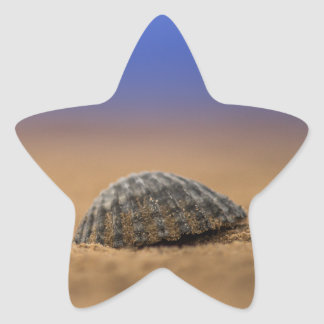 貝殻 星シール