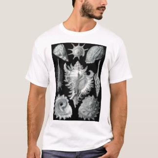 貝殻 Tシャツ