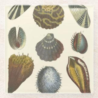 貝類学のコレクション ガラスコースター