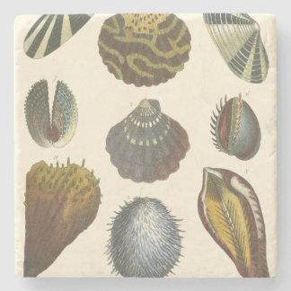 貝類学のコレクション ストーンコースター