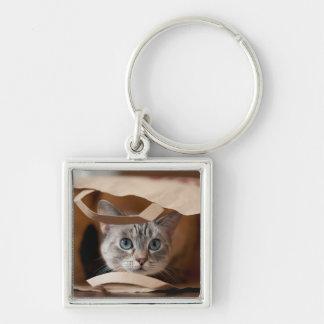 買い物袋の子ネコ キーホルダー