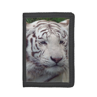 賢く白いトラ