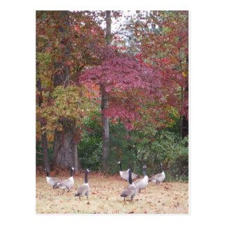 赤いおよびオレンジ紅葉を持つ秋のガチョウ ポストカード