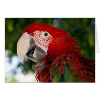 赤いおよび緑のコンゴウインコの挨拶状 カード