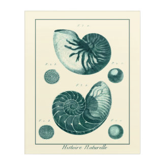 赤いおよび緑の貝殻の芸術 アクリルウォールアート