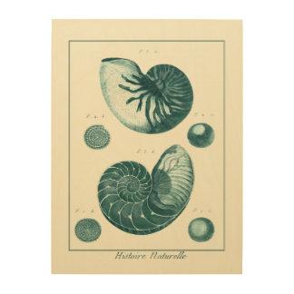 赤いおよび緑の貝殻の芸術 ウッドウォールアート