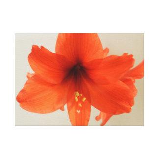 赤いアマリリスの花 キャンバスプリント
