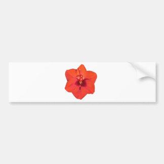 赤いアマリリスの花 バンパーステッカー
