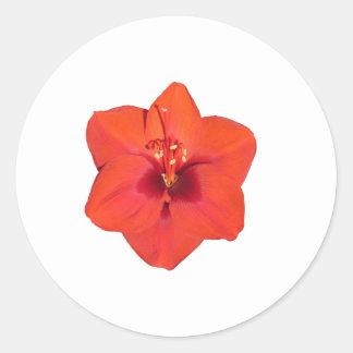 赤いアマリリスの花 ラウンドシール