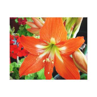 赤いアマリリスの花。 Artislamic.com著写真。 キャンバスプリント