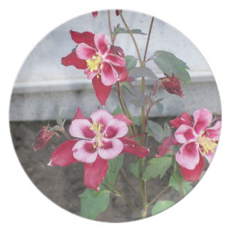 赤いオダマキ(植物)のプレート プレート