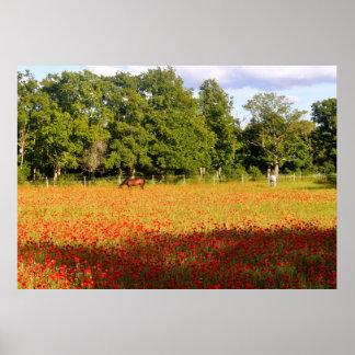 赤いオレンジケシを牧草を食べている馬はゴトランドの守備につきます ポスター