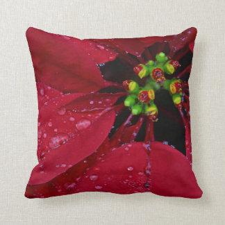 赤いクリスマスのポインセチア クッション
