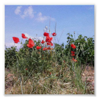 赤いケシおよびつる植物の美しいポスター ポスター