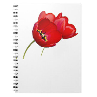 赤いケシのケシの花の黄色の中心の写真 ノートブック