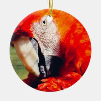 赤いコンゴウインコのオウムのポートレート、エキゾチックな鳥 セラミックオーナメント