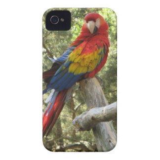 赤いコンゴウインコのオウム Case-Mate iPhone 4 ケース