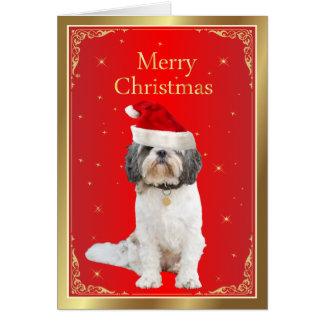 赤いサンタの帽子のクリスマスカードでかわいいシーズー(犬)のTzu犬 カード