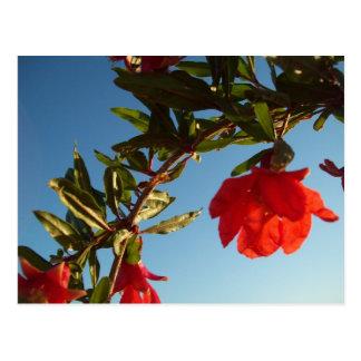 赤いザクロの花の郵便はがき ポストカード