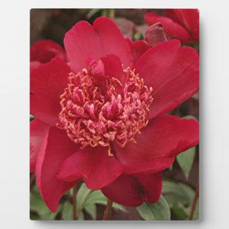 赤いシャクヤクの花 フォトプラーク