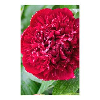 赤いシャクヤクの花 便箋