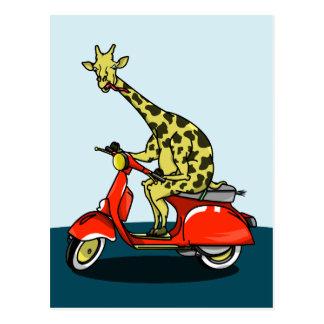 赤いスクーターに乗っているキリン ポストカード