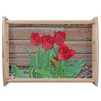 赤いチューリップの花の花びらは全盛で咲きます トレー