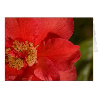赤いツバキの花 カード