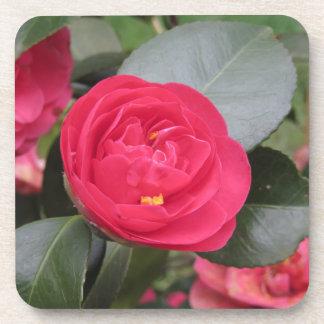 赤いツバキのjaponicaの古代日本の栽培品種 コースター