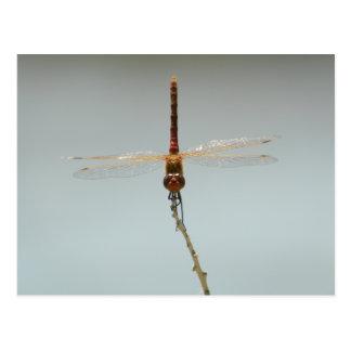 赤いトンボのStillwaterの野生生物の保護区Fallon、Nv ポストカード