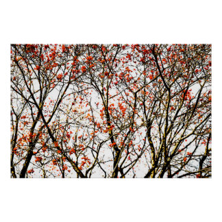 赤いナナカマドのフルーツか灰の果実 ポスター