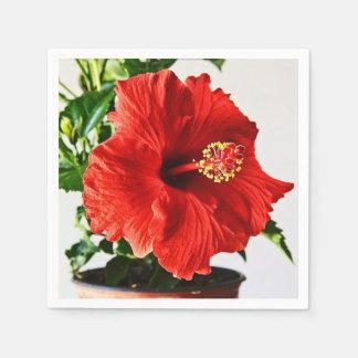 赤いハイビスカスの花 スタンダードカクテルナプキン