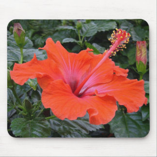 赤いハイビスカスの花 マウスパッド