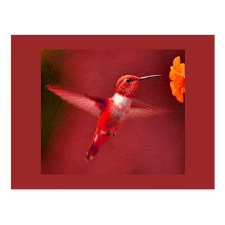 赤いハチドリ ポストカード