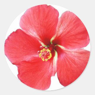 赤いハワイのハイビスカスの花 ラウンドシール