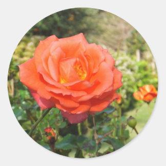 赤いバラのステッカー ラウンドシール