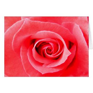 赤いバラのマクロ写真 カード